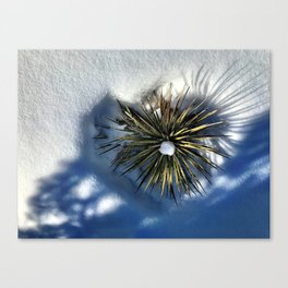 : heart of the colorado yucca : Canvas Print