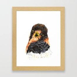 Glamour Falcon Framed Art Print