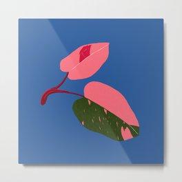 Rare Houseplant Philodendron Pink Princess Metal Print
