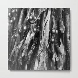Cromer Seaweed, Norfolk Metal Print