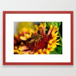 It's a bee's life Framed Art Print