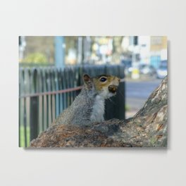 Acorn Antics Metal Print