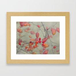 Cinorrodo Framed Art Print