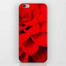 Red Dahlia iPhone & iPod Skin