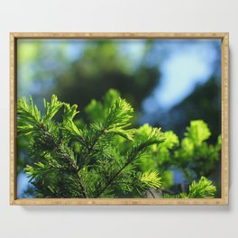 Pine branch background Serving Tray