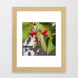 Katydid on Scarlet Runner Beans Framed Art Print