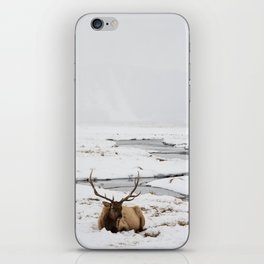 Elk Resting in the Snow iPhone Skin