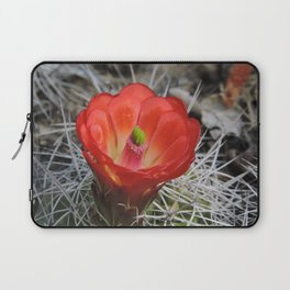 Red Blossom on a Hedgehog Cactus Laptop Sleeve