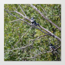 Two 4 One - Belted Kingfisher Canvas Print