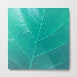Leaf in Aqua Metal Print