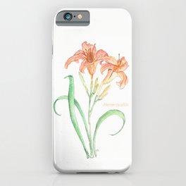 Hemerocallis (Day Lily) iPhone Case