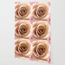 English Rose Wallpaper