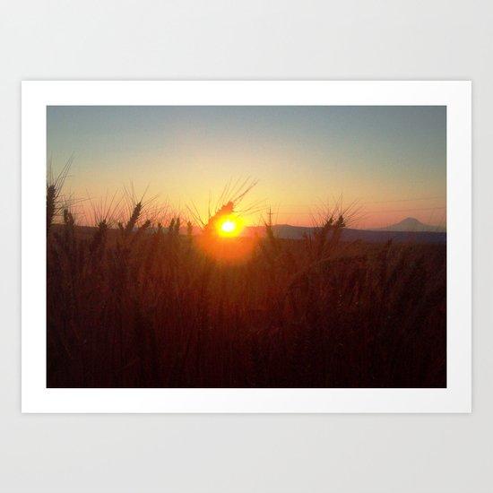 Wheat Sunset Art Print