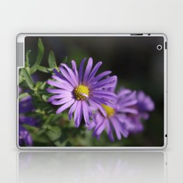 Lovely lavender aster Laptop & iPad Skin