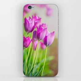 Beautiful view of tulips under sunlight landscape. iPhone Skin