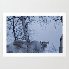 Norwegian Reindeer  Art Print