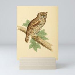 Scops eared Owl7 Mini Art Print