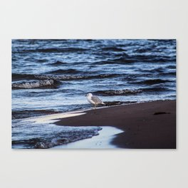 Seagulll by the Waves Canvas Print