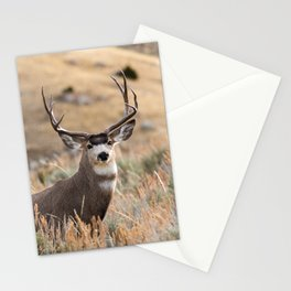 Mule Deer #01 Stationery Cards