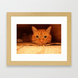 Cat in a Bag Framed Art Print