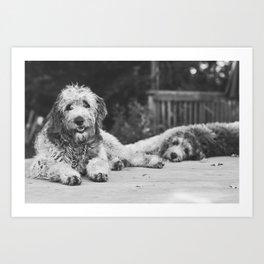 Curious Pups Art Print