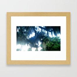 Spanish Moss, Jekyll Island GA Framed Art Print