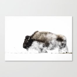 Bison in a Yellowstone Winter Canvas Print