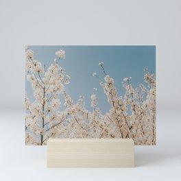 cherry blossom iv Mini Art Print