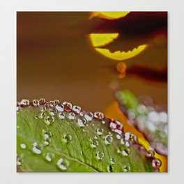 Leaf of rose in rain and evening sun Canvas Print
