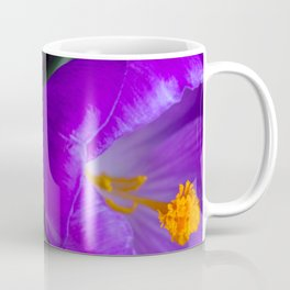 Deep purple and orange crocuses Coffee Mug