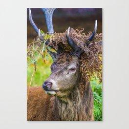 Crowned. Canvas Print