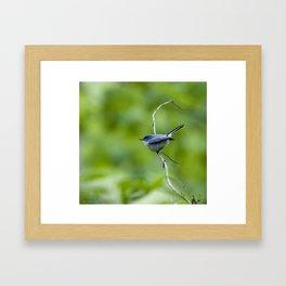 blue/gray gnatcatcher Framed Art Print