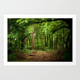 Glade of my Dreams  Art Print