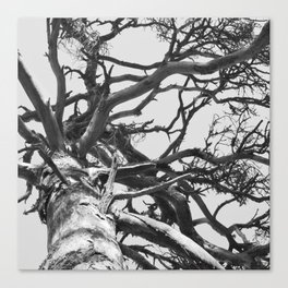 Pinewood Canvas Print