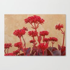 Rustic Flowers Canvas Print