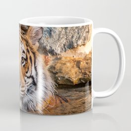 Sheba in the Pool Coffee Mug