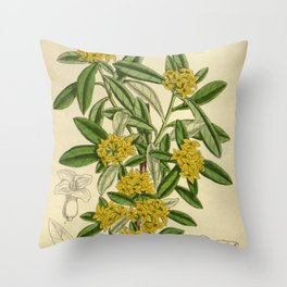 Daphne giraldii, Thymelaeaceae Throw Pillow