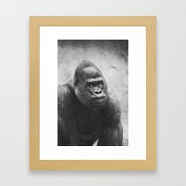 The Look Of A Silver Back Framed Art Print