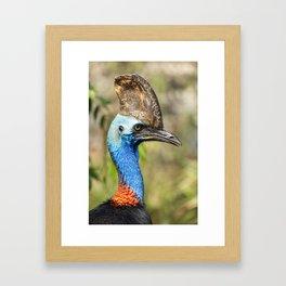 Australian Southern Cassowary Framed Art Print