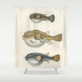 Naturalist Pufferfish Shower Curtain