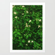 Greenery II Art Print
