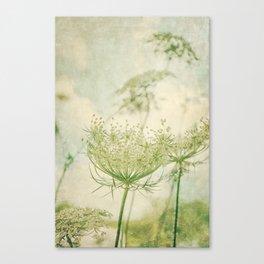 Sanctuary -- White Queen Anne's Lace Meadow Wild Flower Botanical Canvas Print