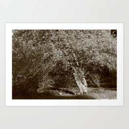 Holly Tree Art Print
