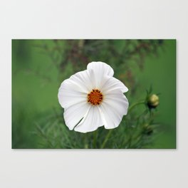 White Wildflower macro Canvas Print