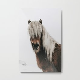 Icelandic Horse - Pony Photo Metal Print