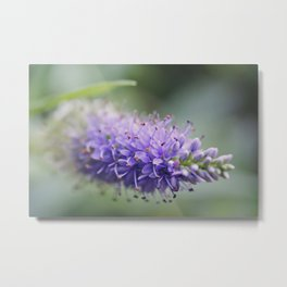 Unremembered acts of kindness... Metal Print