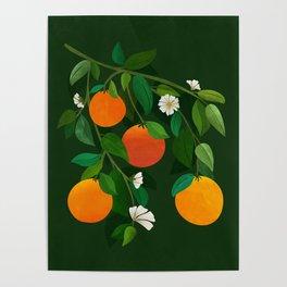 Oranges and Blossoms / Botanical Illustration Poster
