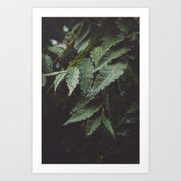 Forest Leaves Art Print