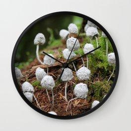 Decomposition: Colony I Wall Clock