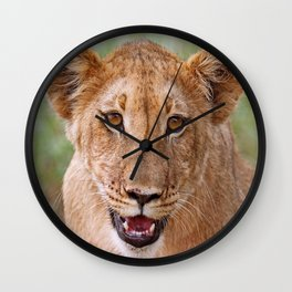 the young lion, Africa wildlife Wall Clock